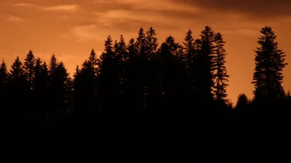 Thumbnail for Pine trees and sky. Coniferous trees. Dark clouds float through the sky. Red sky. Clouds motion