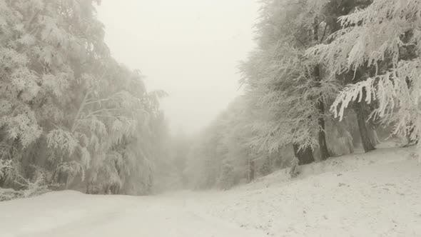 Thumbnail for Winter Forest In Foggy Weather