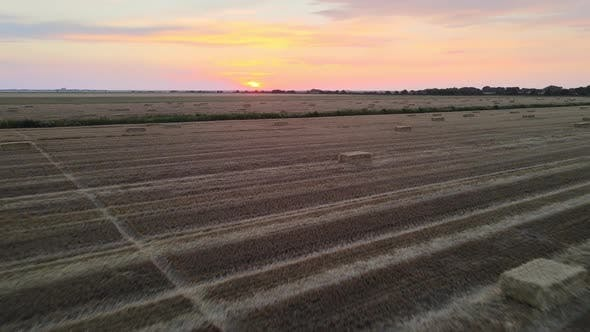 Thumbnail for Summer Wheat Field After A Harvest