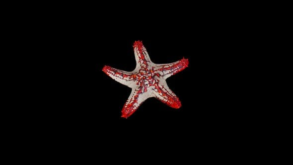 Thumbnail for Red Starfish