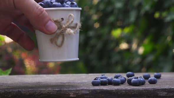 Someone Puts a Small Decorative Bucket with Blueberries on Wooden Bench in the Garden