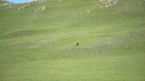 Wild Eagle Perched in Plateau