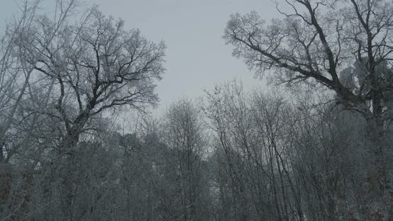 Winter Frozen Silhouettes Of Trees