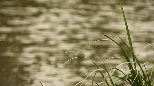 Thumbnail for Green Grass And Waving Water Bokeh