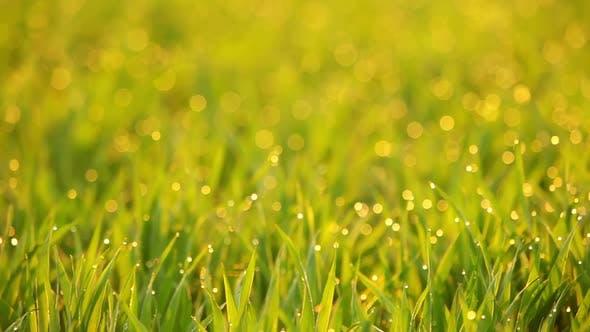 Grass Video Background