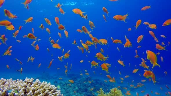 Cover Image for Underwater Colorful Tropical Fishes and Beautiful Corals