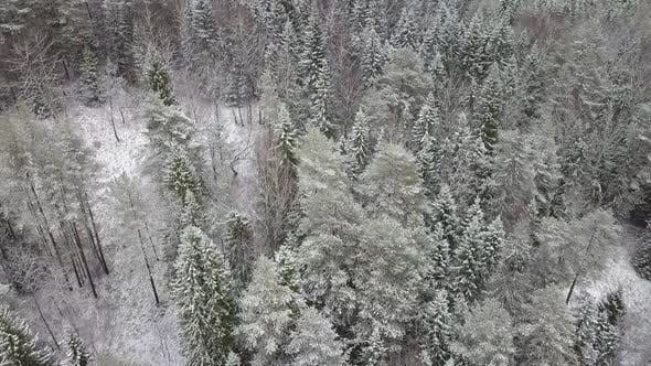 Cover Image for AERIAL: Flying Over the Snowy Forest and Hills.
