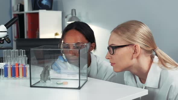 Thumbnail for Close-up of Female Mixed Race Scientists Making Experiment with Hamster By Dropping It a Doze
