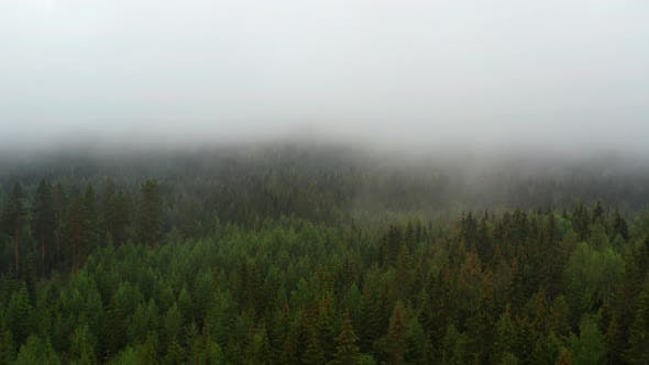 Thumbnail for Lush Green Forest Trees in Norway with a Portion of It Covered By Fog