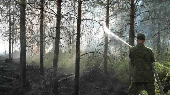 Thumbnail for Firefighter Extinguishing Forest Wildfire