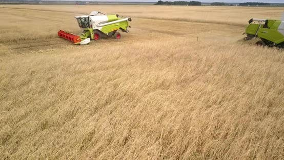 Thumbnail for Flycam Shows Combines Harvesting Wheat Against Distant Car