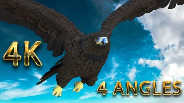 Eagle flying from 4 different angles