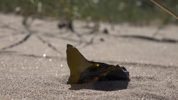 Thumbnail for Beach Pollution
