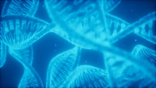 Structure of the DNA Double Helix Animation