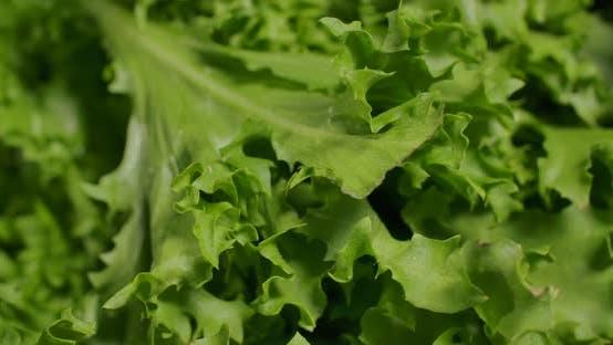 Thumbnail for Green Salad