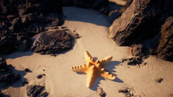 Thumbnail for Starfish on Sandy Beach at Sunset
