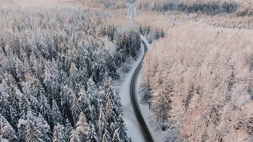 Road Winds Across Picturesque Winter Forest at Sunrise