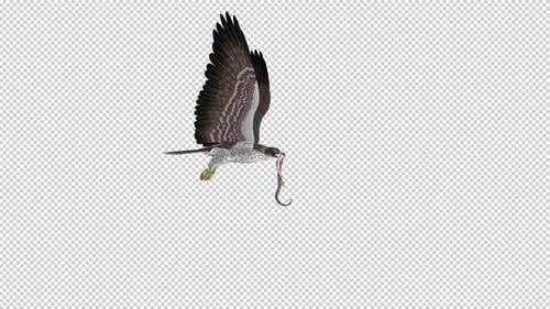 Snake Eagle with Serpent - Flying Loop - Side View