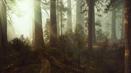 Fantasy Firefly Lichter im Zauberwald