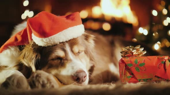 Thumbnail for A Sweet Dog Is Sleeping Near His Christmas Present, in the Background Is a Christmas Tree and a Fire