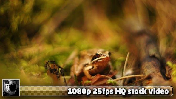 Thumbnail for Little Frog