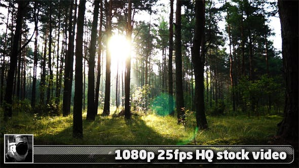 Thumbnail for Sun Over The Trees Time Lapse 1