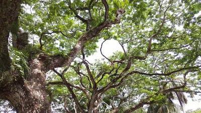 Panning shot of rainforest Malaysia.