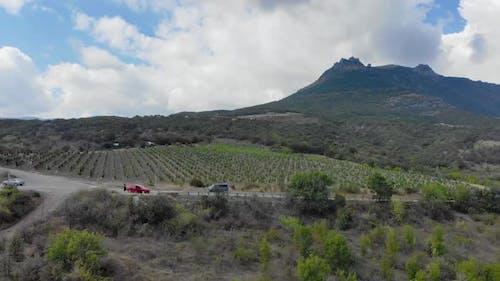 Aerial View of Grape Plantation