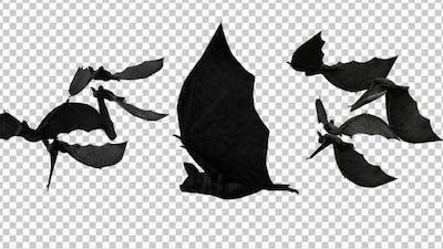 Creepy Bats Transitions
