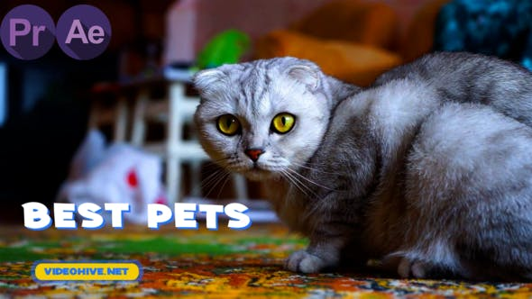Pets Slideshow | MOGRT