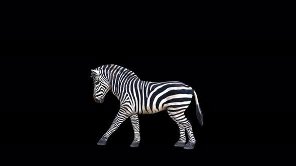 Thumbnail for 4K Zebra Kick