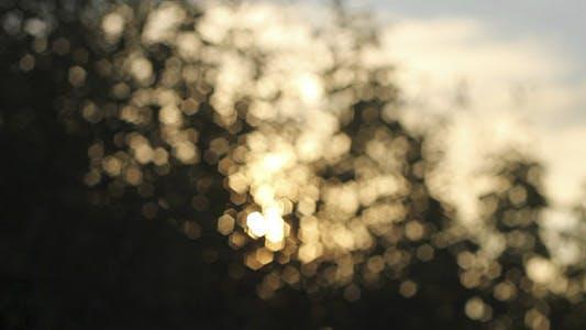 Thumbnail for Sunshine Bokeh