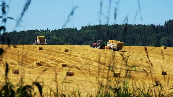 Cover Image for Farmers Harvest Grain From the Field (Farmer Travel with Trailer with Haystacks Over Field)