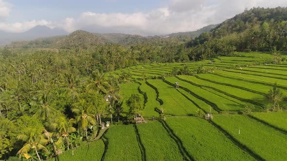 Thumbnail for Rice Terraces and Agricultural Land in Indonesia