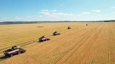 Agricultural work. The harvest season.
