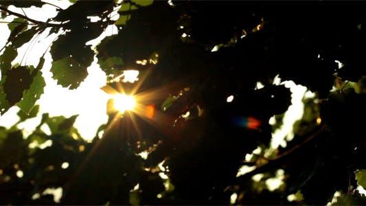 Thumbnail for Sunlight Through The Leaves