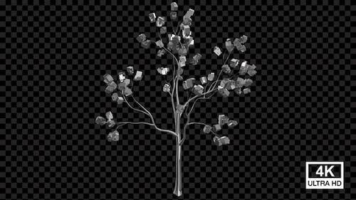 Growing Metal Box Tree