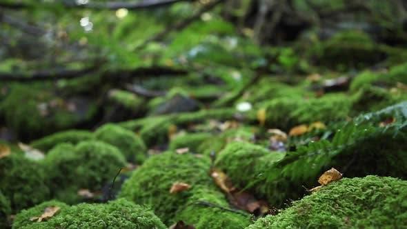 Thumbnail for Details der Bäume in einem grünen Wald.