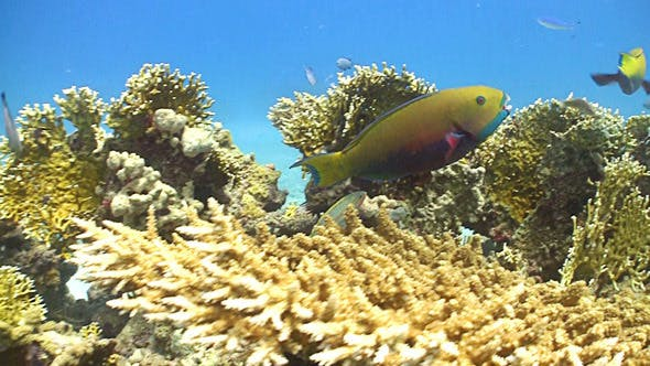 Thumbnail for Colorful Fish on Coral Reef, Red Sea 7
