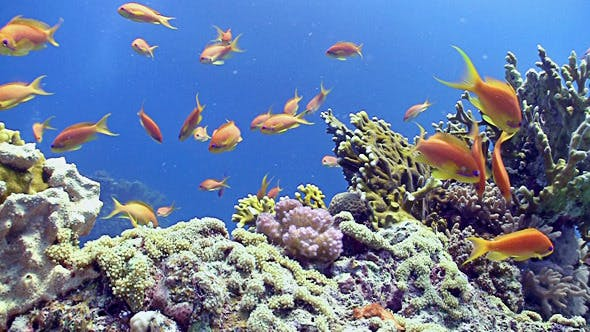 Thumbnail for Colorful Fish On Vibrant Coral Reef, Static Scene 2
