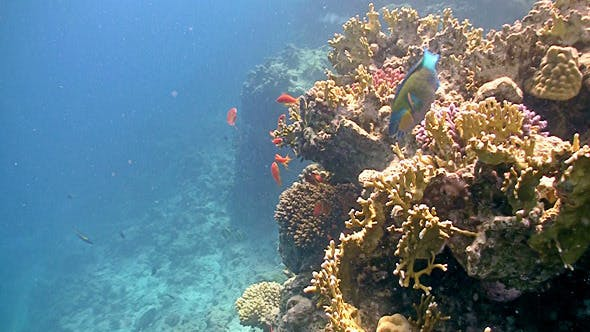 Thumbnail for Colorful Fish On Vibrant Coral Reef, Red Sea