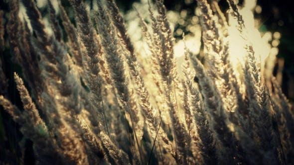 Thumbnail for Natürlicher Blumen-Hintergrund