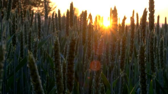 Thumbnail for Sunset in Agricultural Land