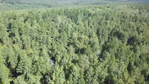 Thumbnail for Aerial Drone Shot Over the North European Forest