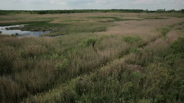 Thumbnail for Aerial View of Bog Lands with White Herons Nesting Place
