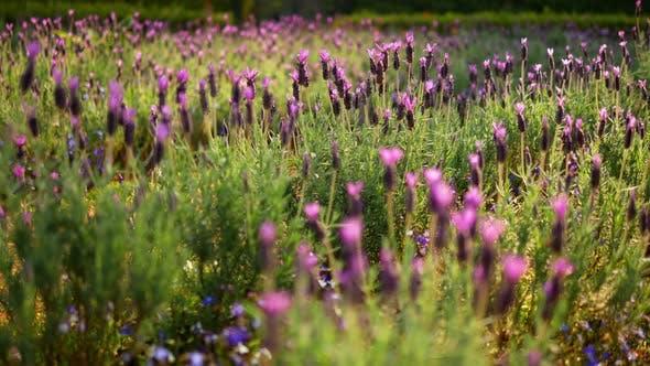 Thumbnail for Flower In Garden