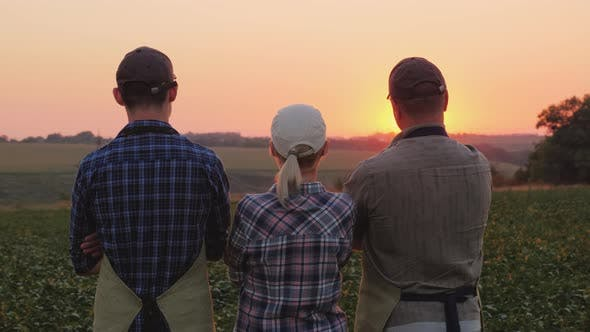 Thumbnail for A Group of Farmers - a Woman and Two Men Watching the Sunset Over the Field. Family Agribusiness
