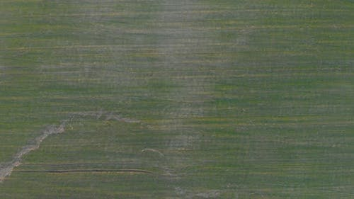 Agricultural Field Top View