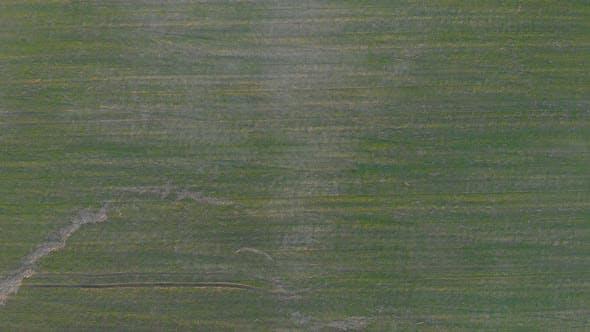 Ansicht des landwirtschaftlichen Feldes