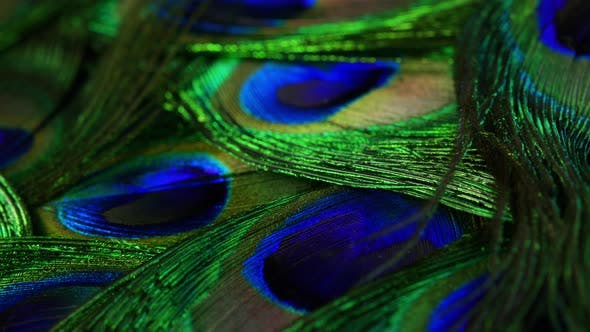 Thumbnail for Very Beautiful Peacock Feathers. Natural Rotating Colorful Pattern. Macro Close-up View. . Can Be